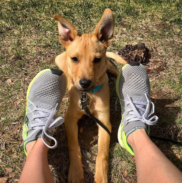 when your pup is just as excited about putting your reeboks on as you are 🐾🐾 . . . #reebok #floatride #reebokfloatride #reebokelite #running #sundayrunday #denver #colorado #spring #exercise #cardio #adventure #explore #optoutside