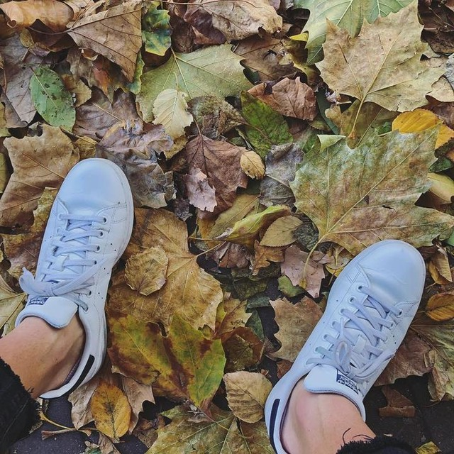 Make like a tree and leaf... 🤦🏼♂️🤷🏼♂️ #autumn #leafs #allsortsofbrown #brown #autumncolours #november #london #londonlife #iphone8plus #adidas #stansmith #brownandyellow #november #instapic #photography